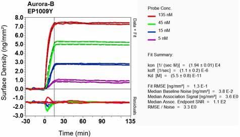 Other-Anti-Aurora B antibody [EP1009Y](ab45145)