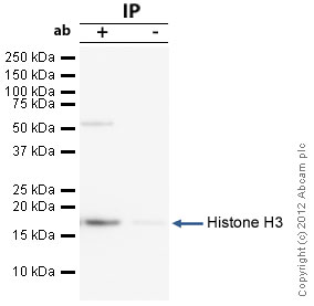 Immunoprecipitation - Anti-Histone H3 antibody - ChIP Grade (ab46765)