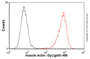 Flow Cytometry-Anti-muscle Actin antibody [EP184E](ab46805)