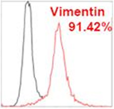 Flow Cytometry - Anti-Vimentin antibody [VI-RE/1] (Phycoerythrin) (ab49918)