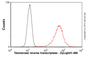 Flow Cytometry - Anti-Telomerase reverse transcriptase antibody [2C4] (ab5181)