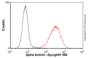 Flow Cytometry-alpha Actinin antibody [MAC 276](ab50599)