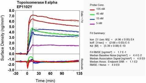 Other-Anti-Topoisomerase II alpha antibody [EP1102Y](ab52934)