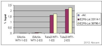 ChIP - Anti-E2F6 antibody - ChIP Grade (ab53061)