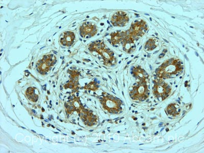 Immunohistochemistry (Formalin/PFA-fixed paraffin-embedded sections) - Anti-Apg7 antibody (ab53255)