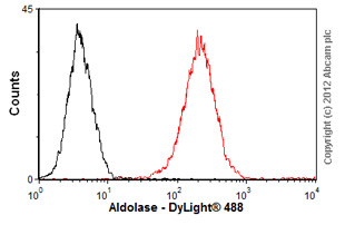 Flow Cytometry-Anti-Aldolase antibody(ab54770)