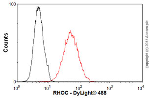Flow Cytometry-RHOC antibody(ab54837)