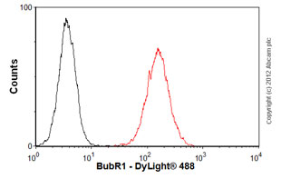Flow Cytometry - Anti-BubR1 antibody (ab54894)