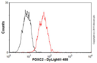 Flow Cytometry-FOXC2 antibody(ab55004)