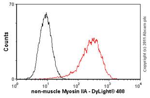 Flow Cytometry - non-muscle Myosin IIA antibody (ab55456)