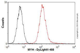 Flow Cytometry-Anti-MYH antibody(ab55551)