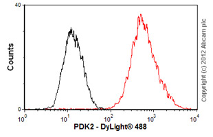 Flow Cytometry-Anti-PDK2 antibody(ab55575)
