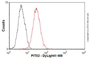 Flow Cytometry-Anti-PITX2 antibody(ab55599)