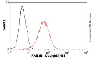 Flow Cytometry-Anti-RAB3B antibody(ab55655)