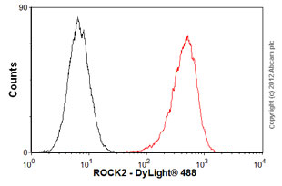 Flow Cytometry-Anti-ROCK2 antibody(ab56661)