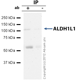 Immunoprecipitation - Anti-ALDH1L1 antibody (ab56777)