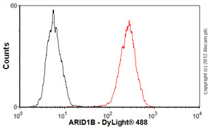 Flow Cytometry-Anti-ARID1B antibody(ab57461)