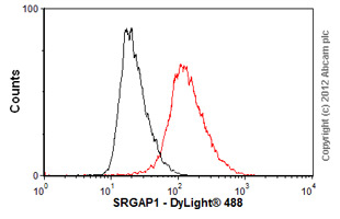 Flow Cytometry-Anti-SRGAP1 antibody(ab57504)