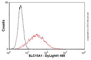 Flow Cytometry - Anti-SLC15A1 antibody (ab58165)