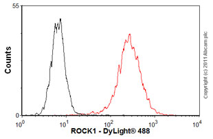 Flow Cytometry-ROCK1 antibody(ab58305)