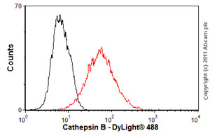 Flow Cytometry - Anti-Cathepsin B antibody [CA10] (ab58802)
