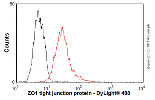 Flow Cytometry-Anti-ZO1 tight junction protein antibody [mAbcam 61357](ab61357)