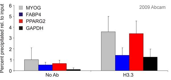 - Histone H3.3 antibody - ChIP Grade (ab62642)