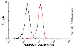 Flow Cytometry-Anti-HNRPUL1 antibody [EP2633Y](ab68480)