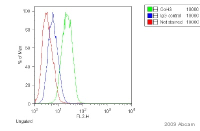 Flow Cytometry - Donkey F(ab')2 polyclonal Secondary Antibody to Rat IgG - H&L (PE), pre-adsorbed (ab7008)