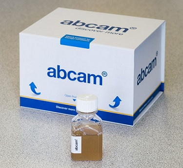 Other-Normal Bovine Calf Serum(ab7479)