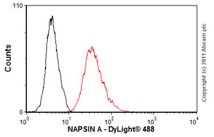 Flow Cytometry - Anti-NAPSIN A antibody [KCG1.1] (ab73021)