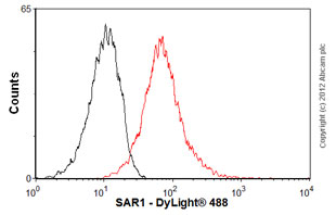 Flow Cytometry-Anti-SAR1 antibody(ab77029)