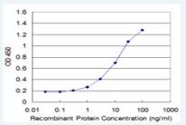ELISA - PURA antibody (ab77734)