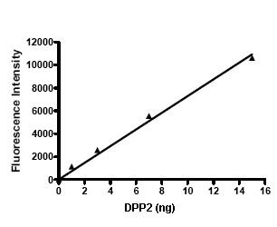 Functional Studies - DPP2 protein (Active) (ab79660)