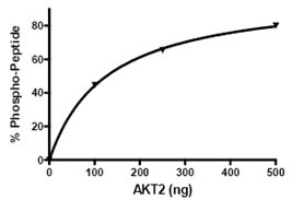 Functional Studies - AKT2 protein (Active) (ab79798)