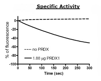 Functional Studies - Peroxiredoxin 1 protein (Active) (ab79945)