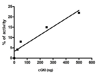 Functional Studies - cGKI protein (Active) (ab80375)