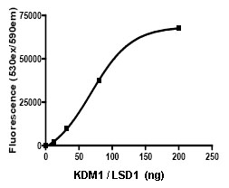 Functional Studies - KDM1 / LSD1 protein (Active) (ab80379)