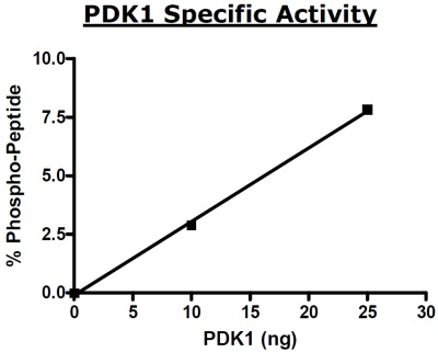 Functional Studies - PDPK1 protein (Active) (ab80411)