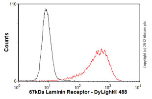 Flow Cytometry - Anti-67kDa Laminin Receptor antibody [MLuC5] - BSA and Azide free (ab80582)