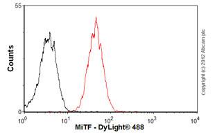 Flow Cytometry - Anti-MiTF antibody [C5] - BSA and Azide free (ab80651)