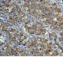Immunohistochemistry (Formalin/PFA-fixed paraffin-embedded sections) - NEDD8 antibody [Y297] (ab81264)