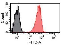Flow Cytometry - Anti-EGFR Affibody® Molecule FITC (ab81872)