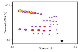 Functional Studies - PIGF protein (ab84148)