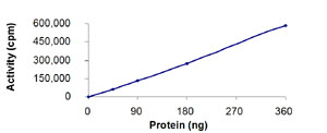 Functional Studies - STK23 protein (Active) (ab84801)