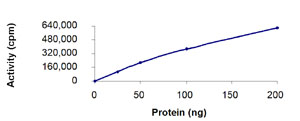 Functional Studies - Recombinant human NAK/TBK1  protein (ab85276)