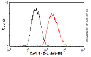 Flow Cytometry-Anti-CaV1.3 antibody [S48A-9](ab85491)