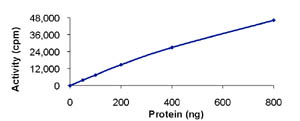 Functional Studies - Dystrophia myotonica protein kinase protein (Active) (ab85755)