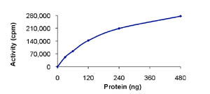 Functional Studies - CLK3 protein (Active) (ab85759)