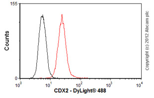 Flow Cytometry-Anti-CDX2 antibody [CDX2-88], prediluted(ab86949)